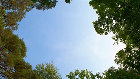 Sky And Clouds In The Forest Canopy By Rdsmath09
