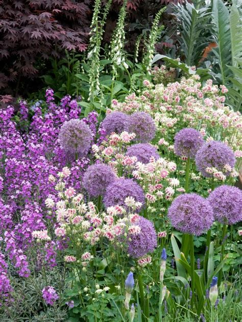 allium colors creating a pastel garden hgtv
