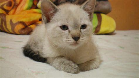 My Little Grumpy Cat By Blackfoxg On Deviantart