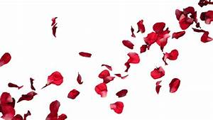 High Definition Seamless Background Animation Of Flowers ...