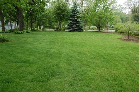 grass lawns home lindstrom lawn care and landscaping antioch il
