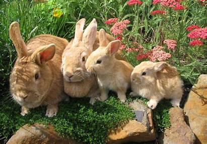 Rabbit Wallpapers Desktop Cave