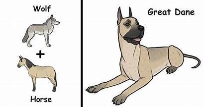 Dog Breeds Unique Origins Funny Hilarious Brutus