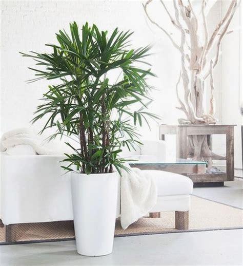 plante dans la chambre la nasa s intéressait au potentiel des plantes pour