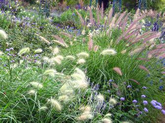 Winterharte Gräser Für Den Garten by Winterharte Gr 228 Ser Im Garten Winterfeste Ziergr 228 Ser Gras
