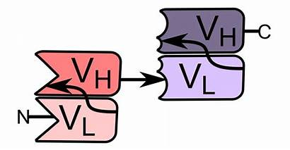 Cell Specific Bi Engager Svg Bite Bispecific
