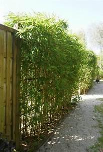 haie bambous idees deco pinterest haie bambou With idee amenagement jardin paysager 1 haie de bambous une idee de plus en plus seduisante