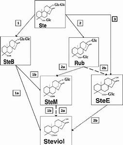 Hypothetical Hydrolysis Steps For The Microbial