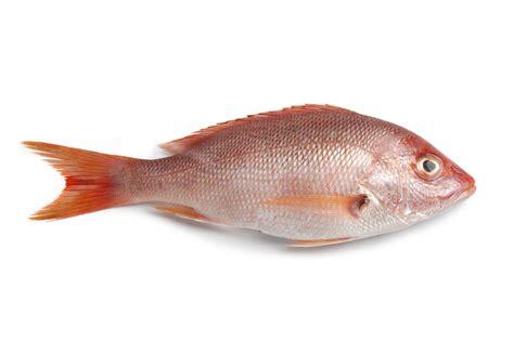 healthy kosher fish options  luxury spot