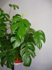 Plante Verte D Appartement : plantes vertes ~ Premium-room.com Idées de Décoration