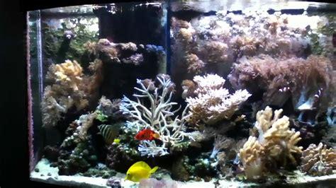 gallon oceanic bow front aquarium  aquarium ideas