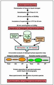 Detergent Phase Extraction Method For Muscle Proteomics  The Flowchart