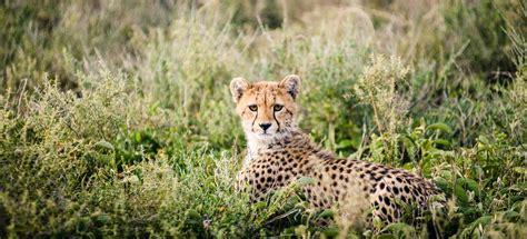 Luxury Safari Tanzania  Luxury Safaris in Serengeti ...