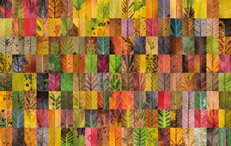 macro  capture  stunning diversity  autumn leaves