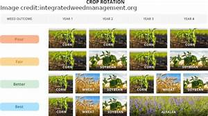 Crop Rotation Alaska Master Gardener Blog