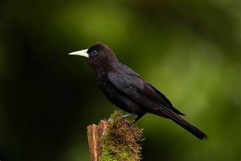 schwarze schoenheit foto bild tiere wildlife wild