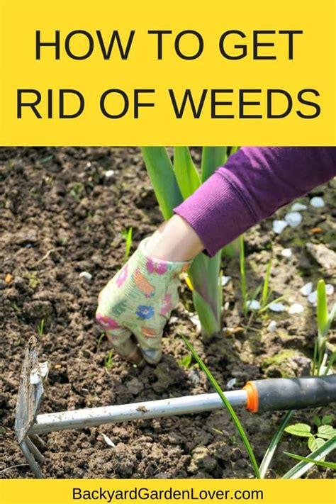 rid  weeds  good