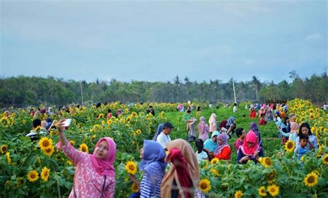 travelingyukcom  taman bunga  yogyakarta