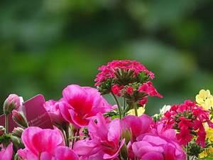 Aktuelle Blumen Im April : frank sus fotoblog mach sichtbar was vielleicht ohne dich nie wahrgenommen worden w re ~ Markanthonyermac.com Haus und Dekorationen