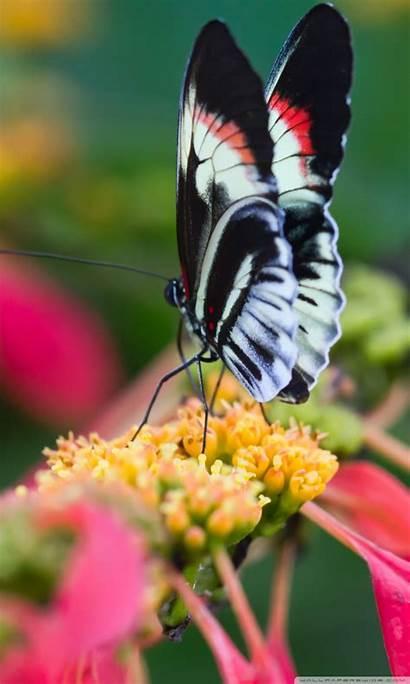 Butterfly Flower Macro