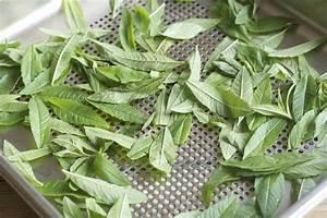 Verveine Plante Tisane : verveine citronnelle s ch e maison jos phine ~ Mglfilm.com Idées de Décoration