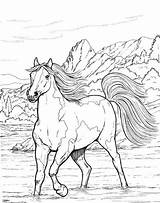 Coloring Horse Pages Adults Printable Horses Adult Animal Realistic Colouring Patterns Bestcoloringpagesforkids Sheets Books Head Google Burning Wood Designkids Info sketch template