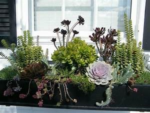 Blumen Für Fensterbank : eine arrangement idee f r sukkulenten statt blumen balkongestaltung pinterest blumen ~ Markanthonyermac.com Haus und Dekorationen