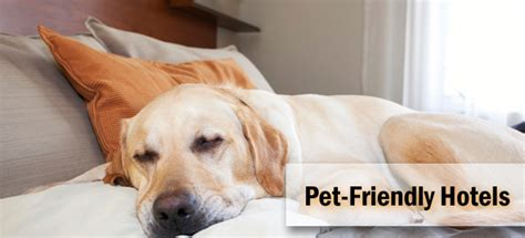 Growing Trends Of Pet Friendly Hotels By Hotelogix Blog