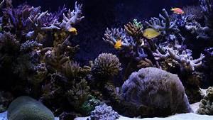 33 Attractive Aquarium background
