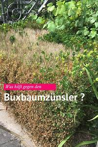 Spritzmittel Gegen Buchsbaumzünsler : was kann man gegen den buxbaumz nsler tun k nigliche gartenakademie pinterest garden ~ Watch28wear.com Haus und Dekorationen