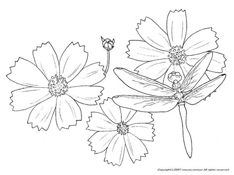 Cosmos Flower Coloring Pages