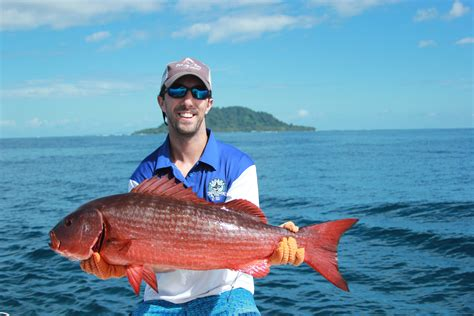 snapper grouper taste vs fishing fish species does america central water there countless they bottom