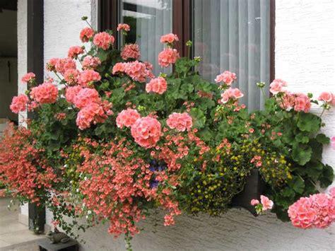 Hängende Blumen Balkon by Balkonblumen K 252 Rzen Mein Sch 246 Ner Garten Forum