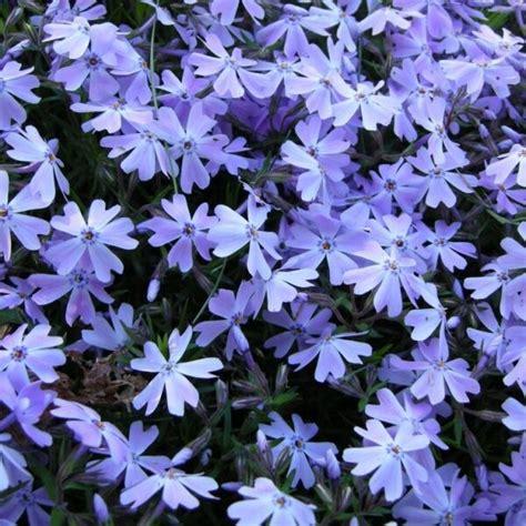 Daudzgadīgās puķes - Stādaudzētava