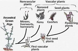 Biological Diversity 5