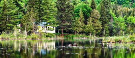 picture trees water woods panoramic reflection