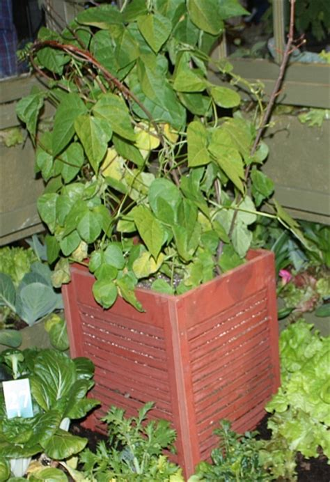 Getting Started With Container Gardening  Hs Blog