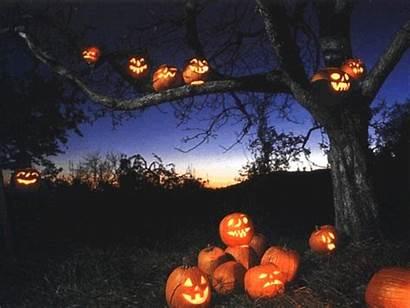 Autumn October Pumpkin Halloween Animated Lantern Fall