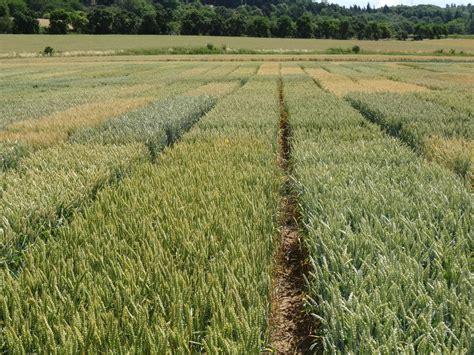 versuchswesen landesbetrieb landwirtschaft hessen
