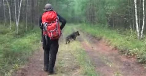 dog protects  year  girl   lost   siberian