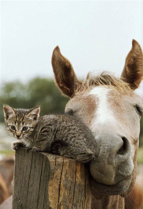 10 Animal Friendship Pictures   Amazing Creatures