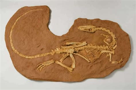 national fossil day  national  international days
