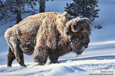 animals dont care   freezing