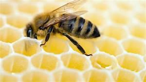 Was Vertreibt Bienen : bienen k nnen koffein nicht widerstehen ~ Eleganceandgraceweddings.com Haus und Dekorationen