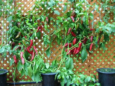 hydroponic vegetable garden design inspiration interior