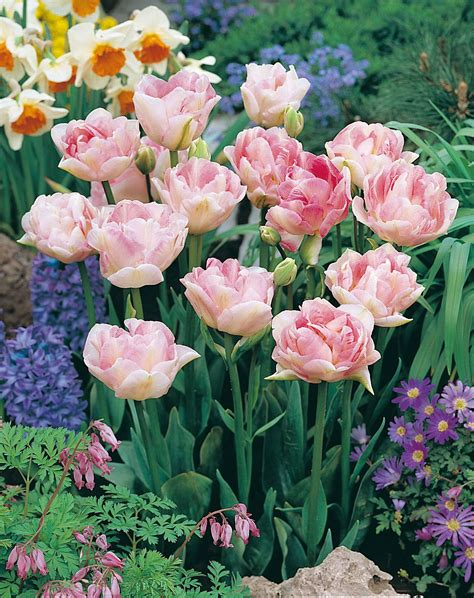 Garten Tulpen Pflanzen by Wer Euch Hat Auch Tulpen Im Garten Aranjamente