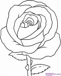 firmtacami: rose flower sketch