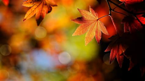 Fall Backgrounds by Fall Backgrounds Wallpaper 1920x1080 70453