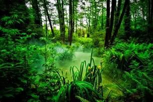 Jungle Landscape Photography