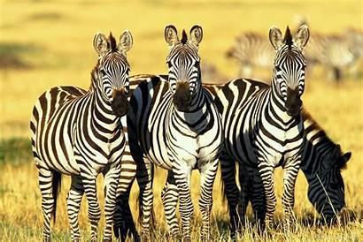 Wildlife Wallpapers Nice Wild Animals Animal Nature